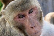 photo of monkey