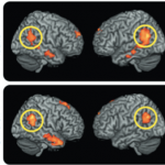 Development of the Human Mind and Brain in the First Year