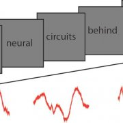 Investigating neural signals underlying language processing in the human brain