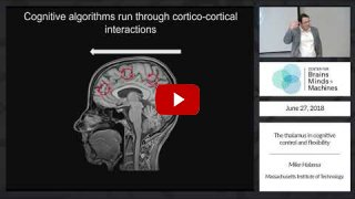 Embedded thumbnail for The thalamus in cognitive control and flexibility (1:19:21)