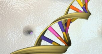 A DNA double helix is seen in an artist's illustration released by the National Human Genome Research Institute. (Handout/Reuters)