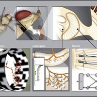 A breakdown of the levels underlying visual motion computation in the fly. (Courtesy of Elsevier, Inc., http://www.sciencedirect.com. Used with permission.)