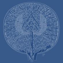 Computational Cognitive Neuroscience