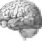 human brain with equations on it an pixalation occuring