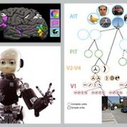 Image from BMM Course on MIT Open Course Ware (MIT OCW.)