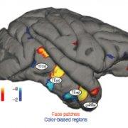 Visual-object processing culminates in inferior temporal cortex (IT)