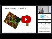 Embedded thumbnail for Tutorial: Basic Neuroscience (46:04)
