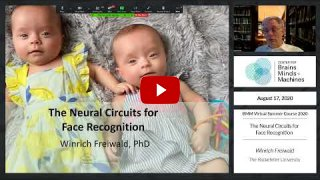 Embedded thumbnail for The Neural Circuits for Face Recognition