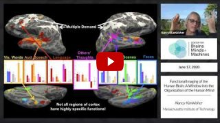 Embedded thumbnail for Functional Imaging of the Human Brain: A Window into the Organization of the Human Mind
